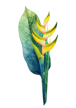 Watercolor heliconia bouquet. Hand painted exotic flowers isolated on white background Illustration