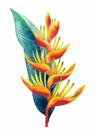 Watercolor heliconia bouquet. Hand painted exotic flowers isolated on white background 向量圖像