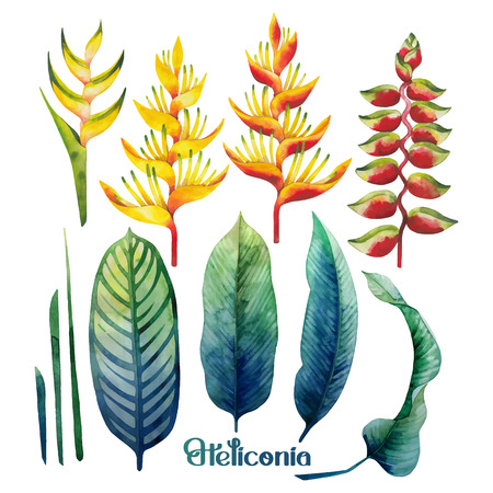 Watercolor heliconia collection Illustration