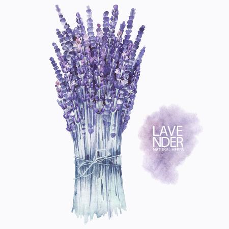 Watercolor lavender bouquet Stock Vector - 81866768