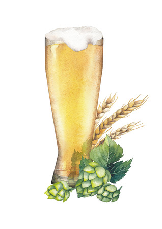 One watercolor glass of pale beer decorated with malts and hops Stock Photo