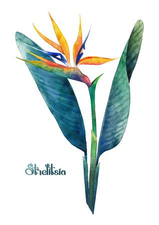 strelitzia: Watercolor strelitzia bouquet