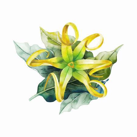 Watercolor ylang ylang