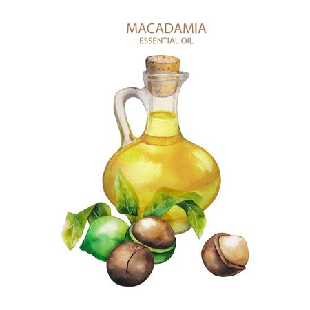 Watercolor macadamia oil Stock Photo