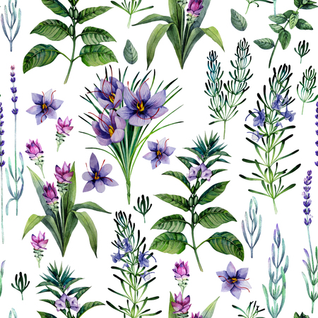 Watercolor herbs and spices Stock Photo