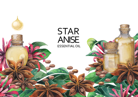 Watercolor star anise design Stock Photo