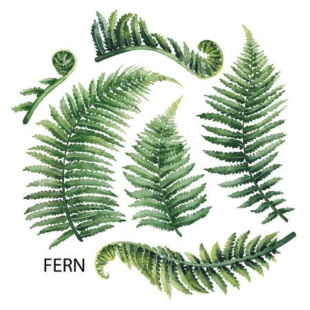 수채화 펀 나뭇잎