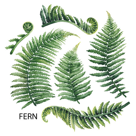 Watercolor fern leaves Standard-Bild