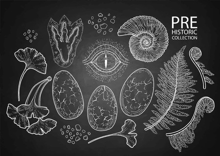 Prehistoric graphic collection of dinosaur body parts, fossils and plants. Vector elements, isolated on the chalkboard.