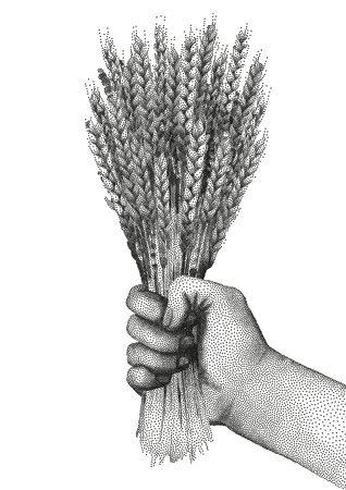 hand holding the bunch of malt drawn in stippling technique Illustration