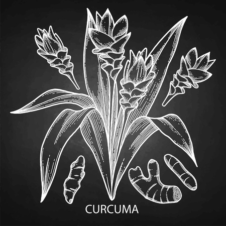 Graphic curcuma set elements isolated on the chalkboard background. Vector natural spices. Illustration