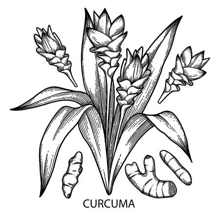 Graphic curcuma set