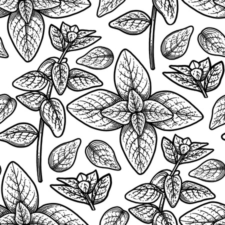 Graphic oregano leaves. Natural vector seamless pattern. Coloring book page for adults and kids Illustration