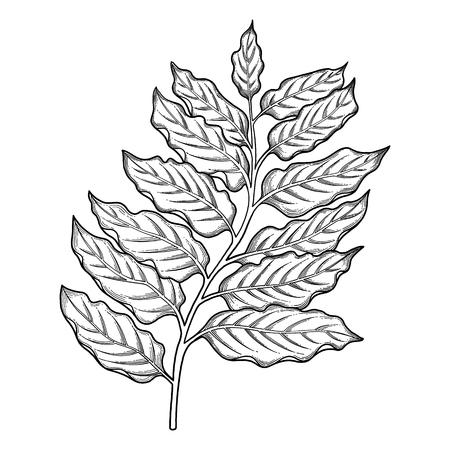 Graphic ylang ylang leaves Illustration