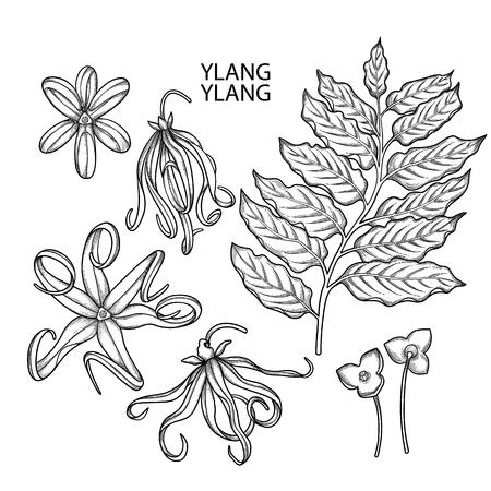 Graphic ylang ylang set