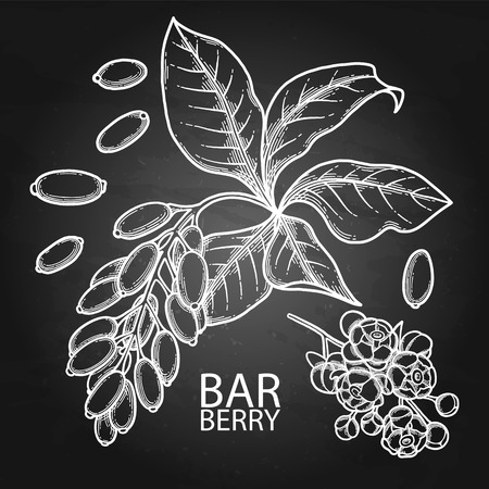 Graphic barberry set