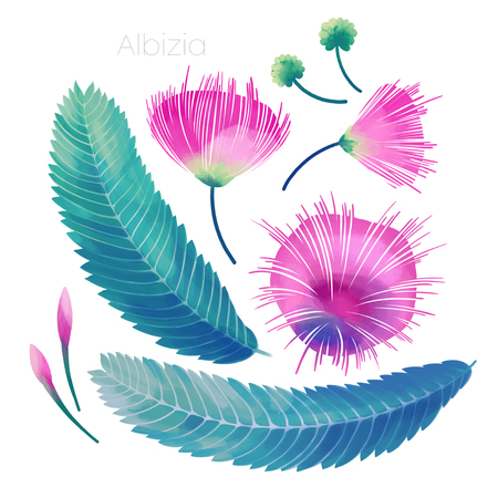 Japanese acacia leaves and flowers