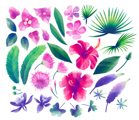 Collection of exotic flowers and leaves