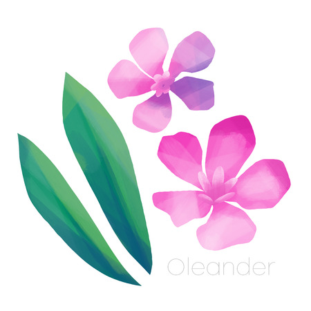 Pink flowers and leaves of Oleander Stock Photo