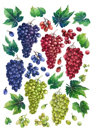 Watercolor bunches of white, blue and red grapes, leaves and branches Archivio Fotografico - 110771021