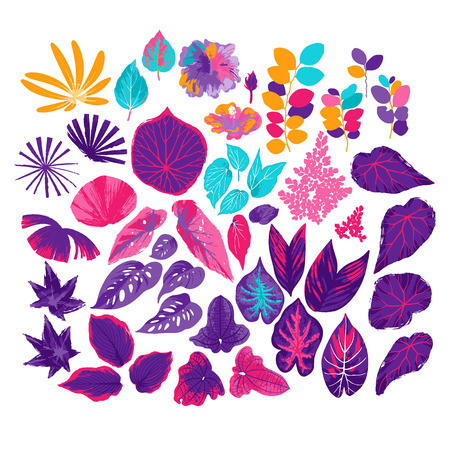 Vector collection of different exotic leaves isolated on white background. Abstract design elements drawn in the technique of rough brush in vibrant colors
