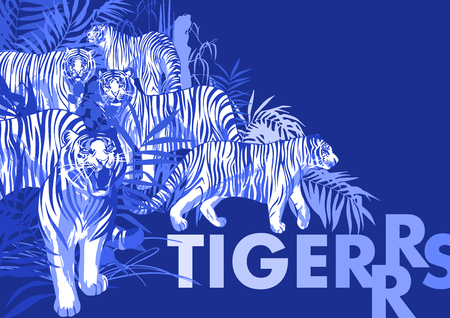 Graphic design with tigers standing, walking and roaring among the exotic leaves and trees. Vector art isolated on blue background