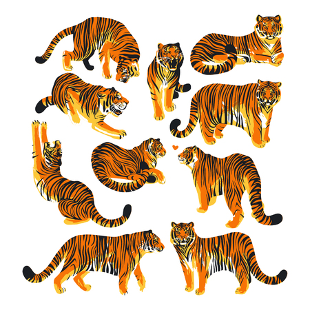 Graphic collection of tigers in different poses. 写真素材