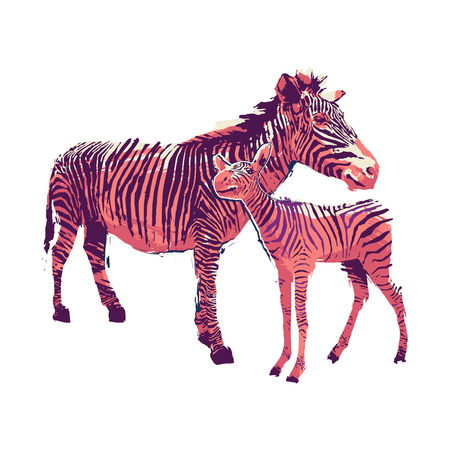 Graphic standing zebra with he cub drawn in the technique of rough brush