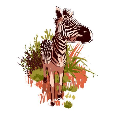 Grafische Zebras, die in der Steppenlandschaft vorwärts gehen. Vektorillustration gezeichnet in der Technik des rauen Pinsels in ruhigen Farben