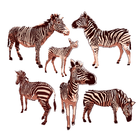 Graphic collection of zebras in calm colors. Vector animals drawn in the technique of rugh brush
