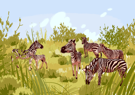 The herd of zebras sowing in steppe landscape. Vector graphics drawn in the technique of rough brush in calm colors 일러스트