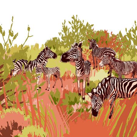Die Herde von Zebras, die in der Steppenlandschaft säen. Vektorgrafiken in der Technik des groben Pinsels in ruhigen Farben gezeichnet