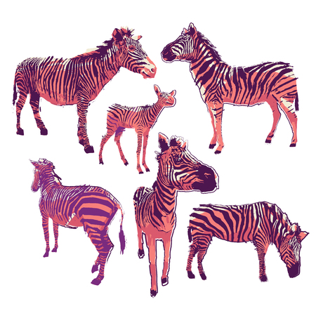 Graphic collection of zebras in bright colors drawn in the technique of rugh brush