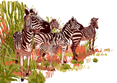 The herd of zebras sowing in steppe landscape. Vector graphics drawn in the technique of rough brush in calm colors Ilustracja