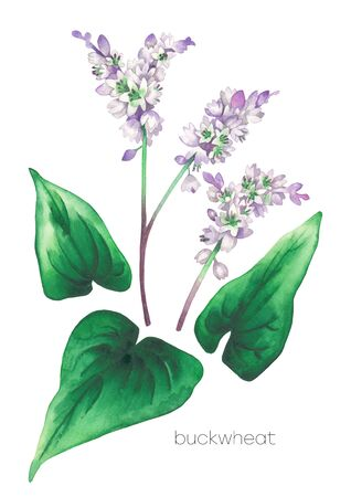 Watercolor set of buckwheat flowers and leaves Banco de Imagens
