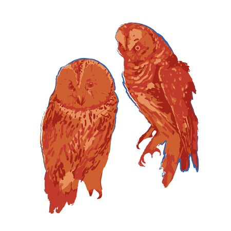 Two sitting owls isolated on white background. Vector illustration drawn with rough brush in warm colors Stock Illustratie