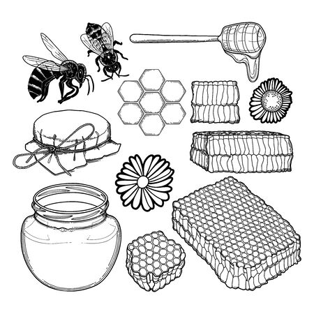 Graphic set of honey bottles, caps, dripper, honeycombs, bees and meadow flowers isolated on white background. Isolated vector design