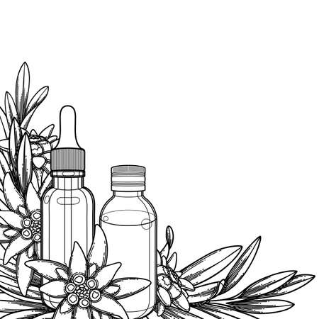 Graphic essential oil bottles decorated with edelweiss leaves and flowers. Vector botanical design isolated on white background