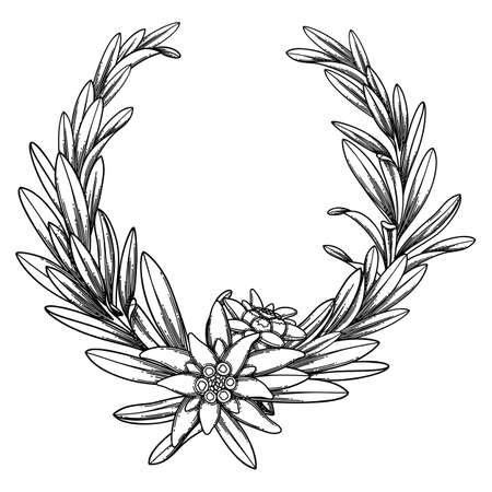 Graphic edelweiss wreath. Vector botanical design isolated on white background