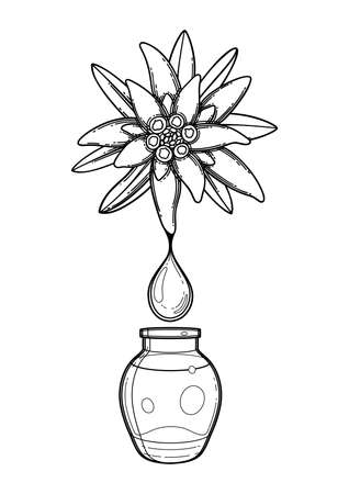 Graphic oil drop dripping from the edelweiss plant inside the glass bottle. Vector botanical design isolated on white background