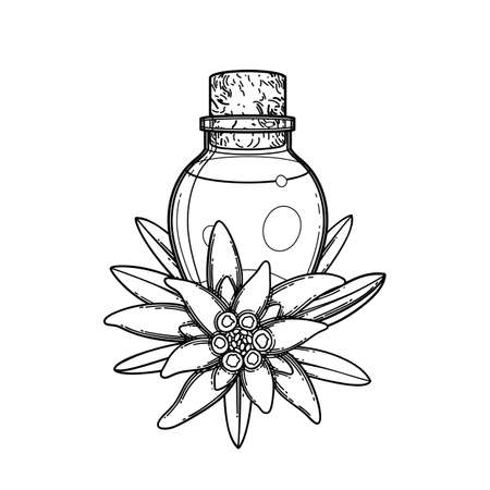 Graphic essential oil bottle decorated with edelweiss leaves and flowers. Vector botanical design isolated on white background