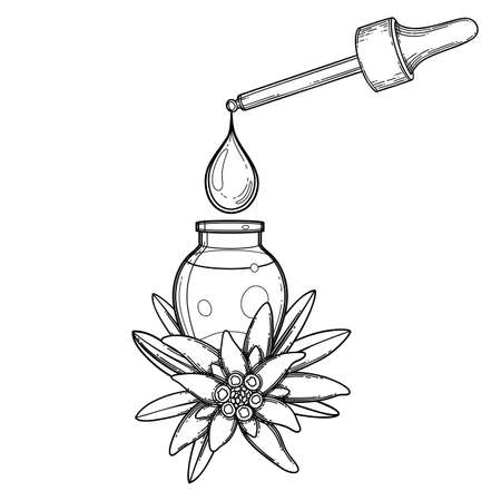 Graphic oil drop dripping from the dropper inside the glass bottle decorated with edelweiss leaves and flowers. Vector botanical design isolated on white background