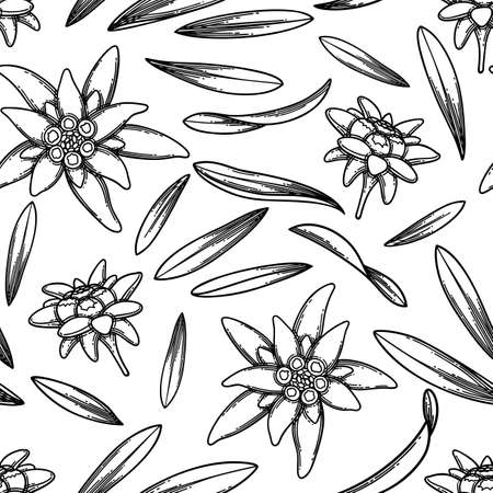 Seamless pattern of graphic edelweiss flowers and leaves.
