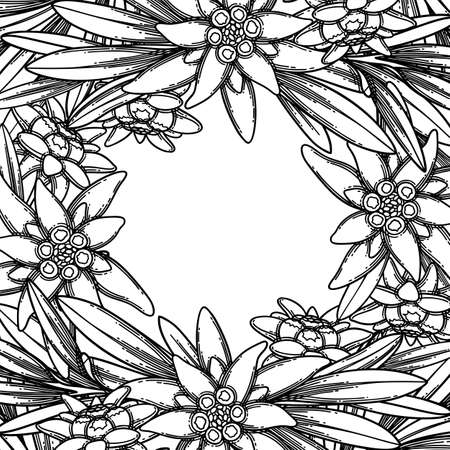 Graphic edelweiss flowers and leaves. Vector botanical design