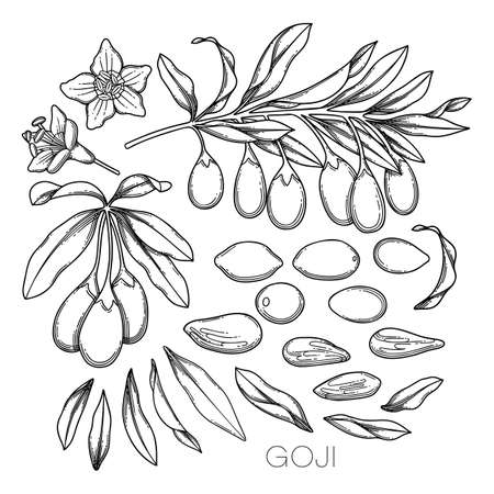 Collection of graphic goji flowers, leaves and berries. Vettoriali