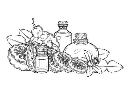 Graphic oil bottles surrounded by bergamot fruits, leaves and flower