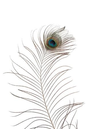 piuma di pavone: Piume di pavone isolata su sfondo bianco. Archivio Fotografico