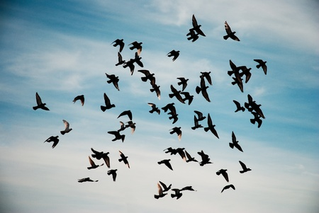 Silhouettes of pigeons flying in the sky.