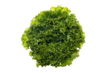 vibrat color: Green lettuce isolated on white background.