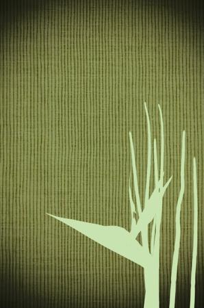 Bird of paradise flower (Strelitzia reginae) green background. photo